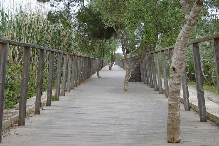 Golfreis Mallorca - Parc Natural de s'Albufera
