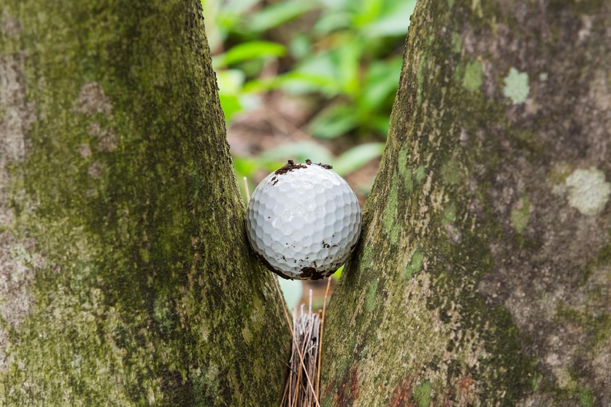 Pin High bal klem tussen twee bomen